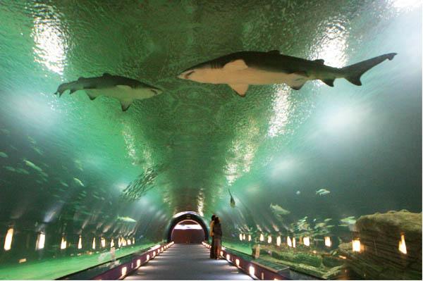 acvariul L'Oceanogràfic