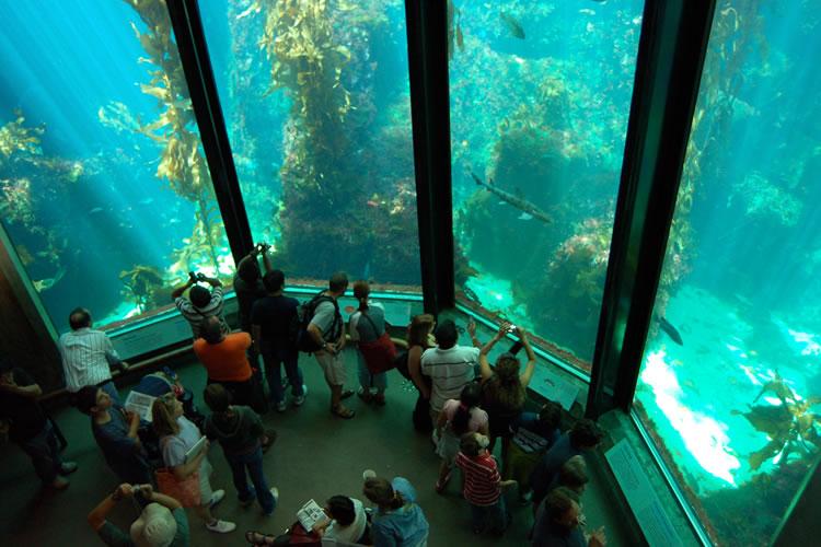 acvariul Monterey Bay