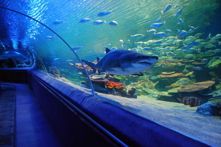 acvariul Turkuazoo